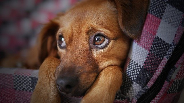 El año del horóscopo chino perro